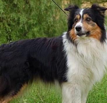 Köpeğe 5 milyon dolar miras kaldı