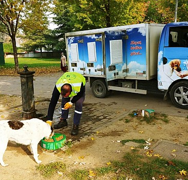Sokak hayvanları unutulmadı 62 ton mama dağıtıldı