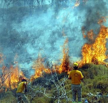 Çanakkale'de 2,5 hektar ormanlık alan yandı