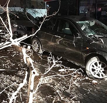 Bursa'da şiddetli lodos ağacı devirdi