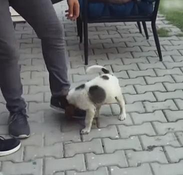 Yangından kurtarılan yavru köpek ekiplerin maskotu oldu