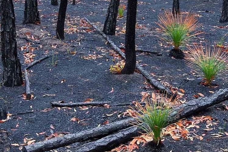 Birkaç yıla yanan alanlar yeşille kaplanır: Orman yok olmaz