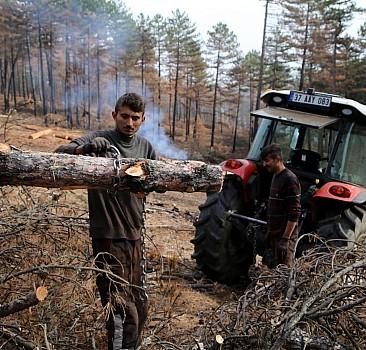 Kastamonu'da yanan orman alanları yeniden canlandırılıyor