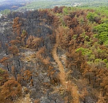 Yanan ormanlık alanlar için harekete geçildi