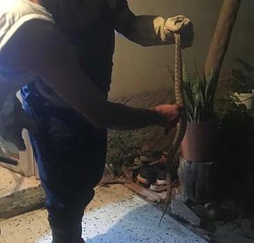 Adana'da bir eve yılan girdi
