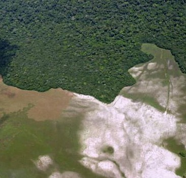 Salonga Ulusal Parkı'nda tehlike geçti
