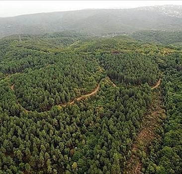 Kilis'te ormanlık alanlara girişler yasaklandı