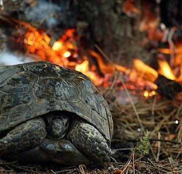 Orman yangınlarından birçok canlı zarar görüyor