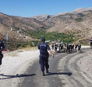 Elazığ'da ağıldan kaçan keçiler termal drone ile bulundu