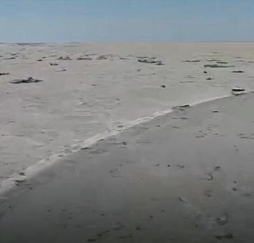 Tuz Gölü'nde su çekildi, yüzlerce flamingo öldü