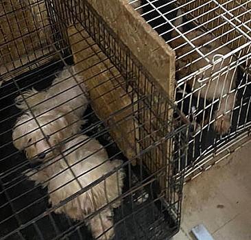 Bodrum katında 68 köpek bulundu