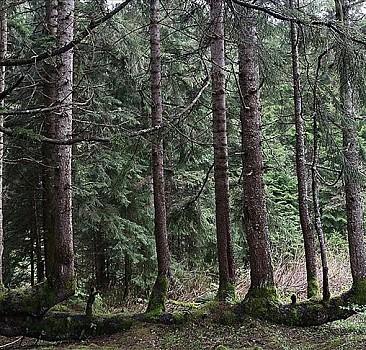 Güngören'de her bina 5 ağacı kesilmekten kurtardı