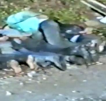 Srebrenitsa soykırımının tanıkları
