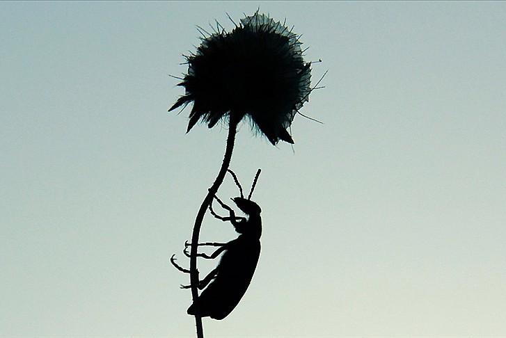 AB, açlığa çözüm için 'böcekleri' işaret etti!