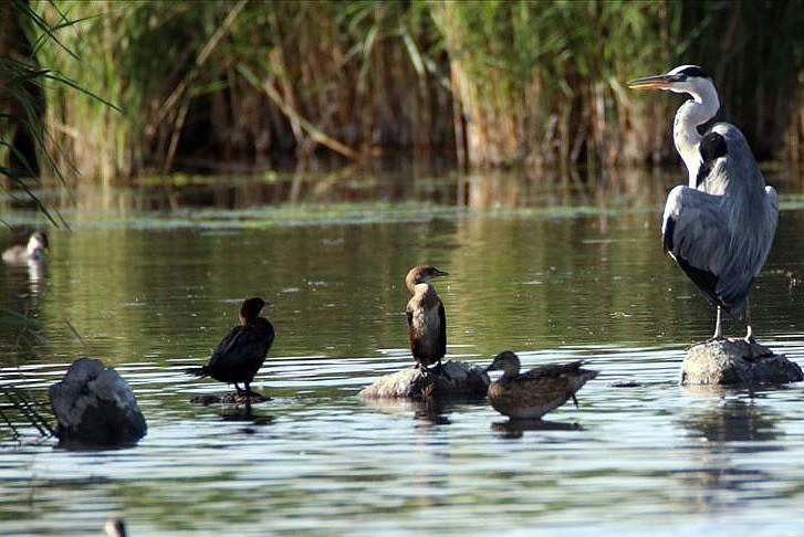 Kış uzayınca kuşların göç sezonu değişti
