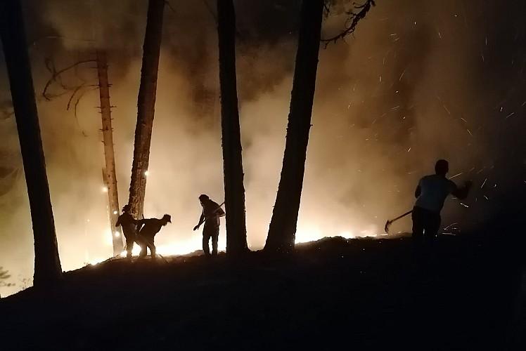 Aydın'daki orman yangınına müdahale devam ediyor