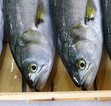Balıkçıların lüfer sevinci