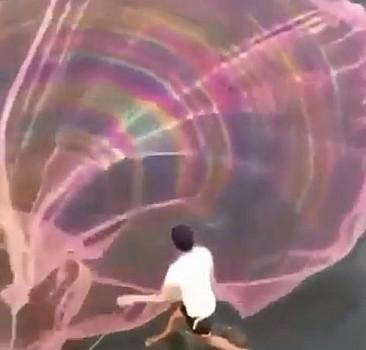 Balık ağıyla görsel şölen