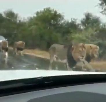Güney Afrika''da sıradan bir yol