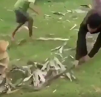 Köpeği pitondan zor kurtardılar